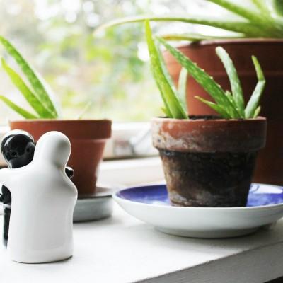 Aloe Vera Pflanzen zuhause halten
