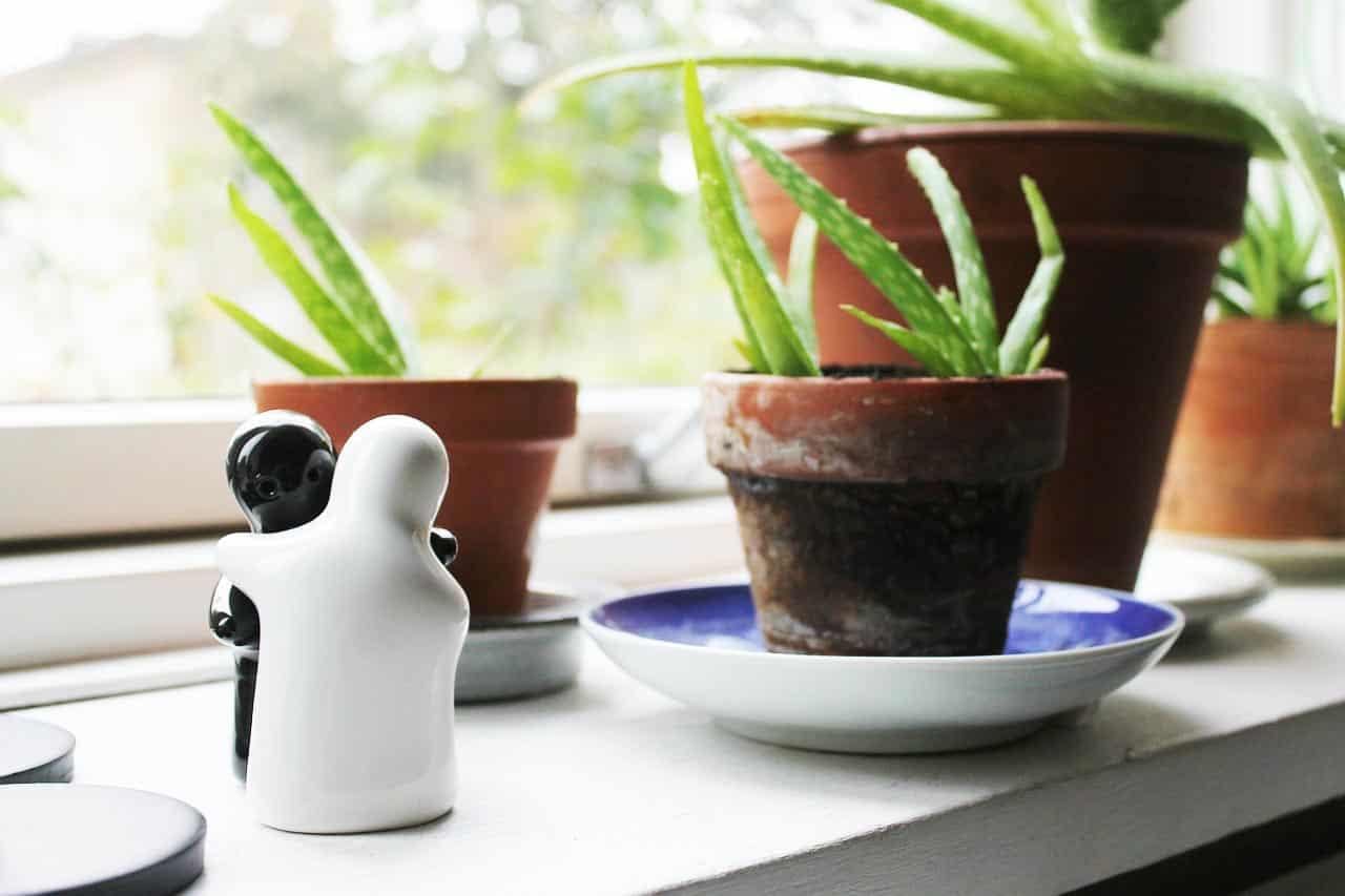 Gleitgel selber herstellen so gelingt das eigene gleitgel for Pflanzen zu hause